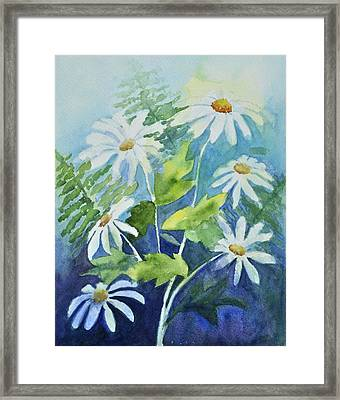 Daisy Delight  Framed Print by Sandy Fisher