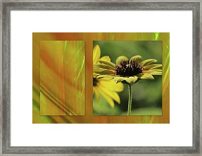 Framed Print featuring the digital art Daisy Diptych by Irma BACKELANT GALLERIES