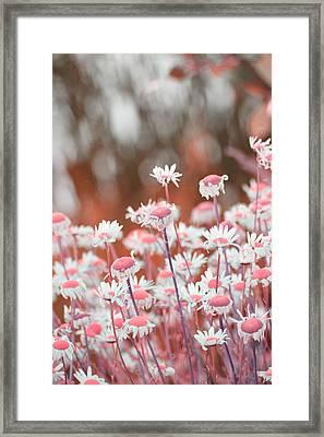 Daisy Dreams Framed Print