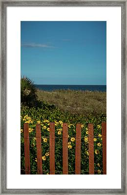 Daisy Dune Fence Delray Beach Florida Framed Print by Lawrence S Richardson Jr