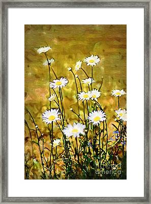 Framed Print featuring the photograph Daisy Field by Donna Bentley