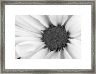 Daisy Flower Macro Framed Print by Tom Mc Nemar