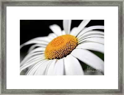 Daisy Flower Up Close Framed Print by Terry Elniski
