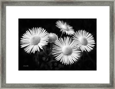 Framed Print featuring the photograph Daisy Flowers Black And White by Christina Rollo