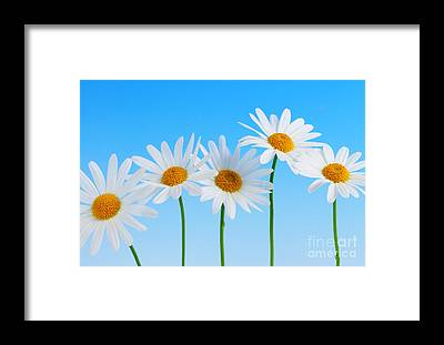 Yellow Daisy Framed Prints