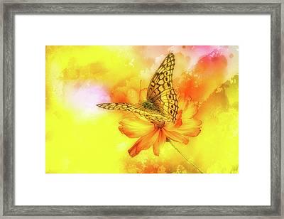Daisy For A Butterfly Framed Print