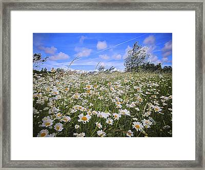 Daisy Heaven Framed Print by Angela Aird