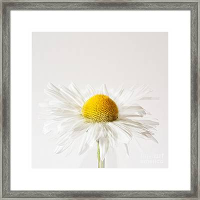 Daisy Impression Framed Print by Janet Burdon