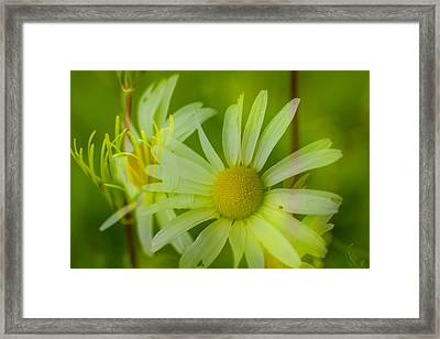 Daisy In Abstract Way Framed Print