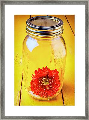 Daisy In Glass Jar Framed Print by Garry Gay