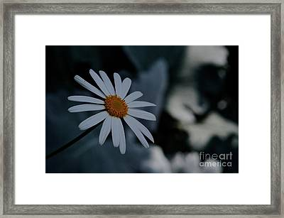 Daisy In Gloom Framed Print by Tim Good