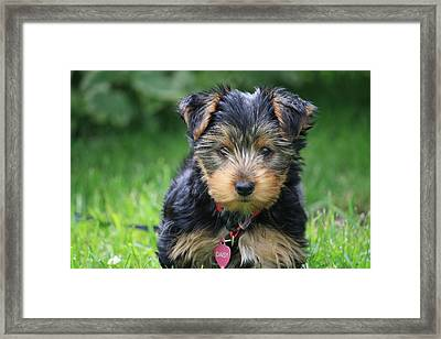 Daisy Framed Print by Mary-Lee Sanders