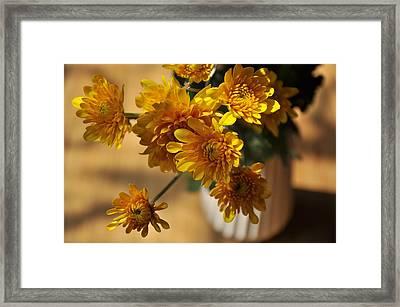 Daisy. Framed Print by Nhi Ho Thi Xuan