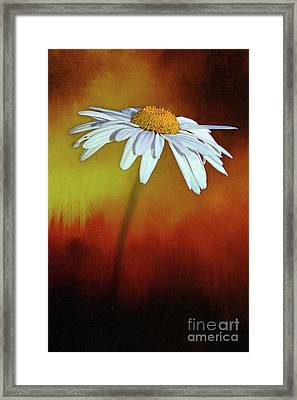 Daisy On Heat By Kaye Menner Framed Print by Kaye Menner