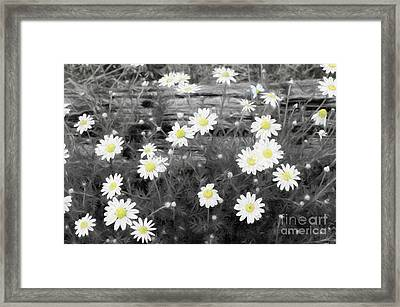 Framed Print featuring the photograph Daisy Patch by Benanne Stiens