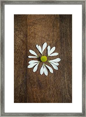 Daisy Petals On Wooden Background  Framed Print