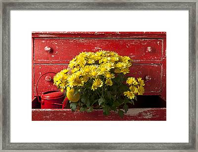 Daisy Plant In Drawers Framed Print by Garry Gay