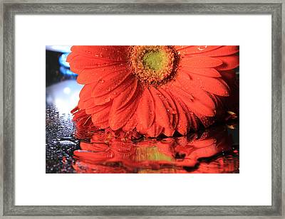 Daisy Reflections Framed Print