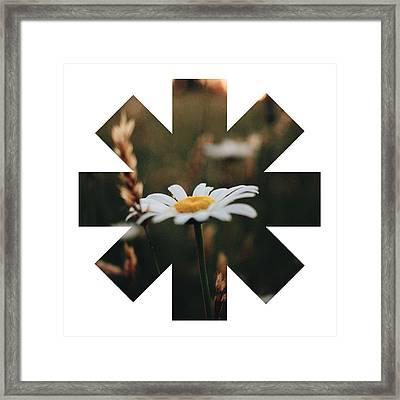 Daisy Framed Print by Rhcp