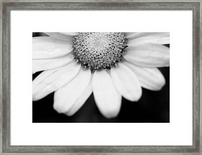 Daisy Smile - Black And White Framed Print