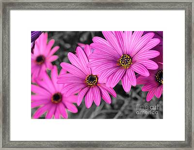Daisy Steps Framed Print by Kaye Menner