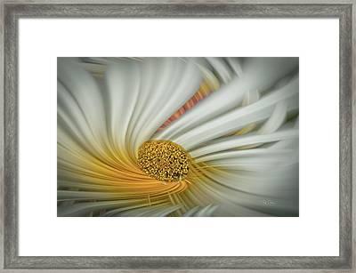 Daisy Swirl Framed Print