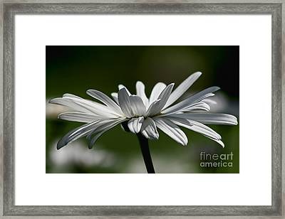 Daisy Framed Print by Teresa Zieba