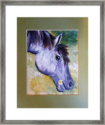 Daisy The Old Mare     52 Framed Print
