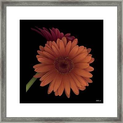 Daisy Tilt Framed Print by Heather Kirk