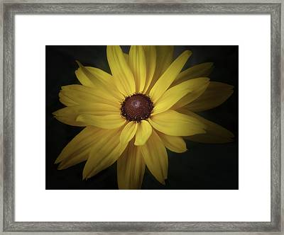 Daisy Framed Print by Tim Reaves
