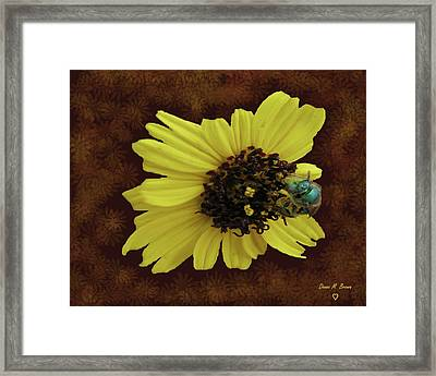 Framed Print featuring the photograph Daisy With Bee  by Donna Brown