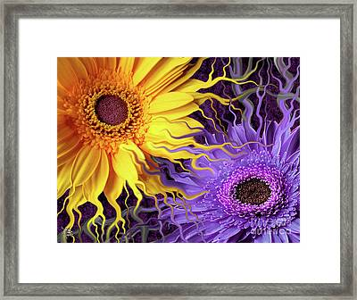 Daisy Yin Daisy Yang Framed Print