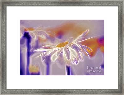 Daisyday - 101b Framed Print by Variance Collections