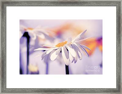 Daisyday 11b Framed Print by Variance Collections