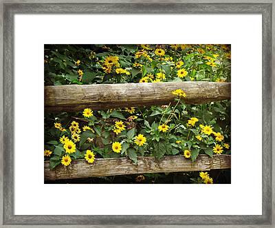 Daisy's Fence Framed Print