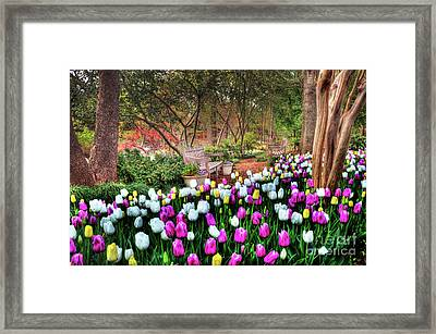 Dallas Arboretum Framed Print by Tamyra Ayles