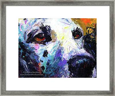 Dalmatian Dog Close-up Painting By Framed Print