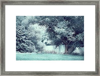 Dalmatian In Blue Woods Framed Print
