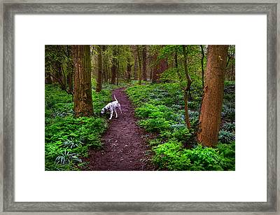 Dalmatian In The Spring Woods Framed Print by Jenny Rainbow