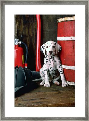Dalmatian Puppy With Fireman's Helmet  Framed Print by Garry Gay