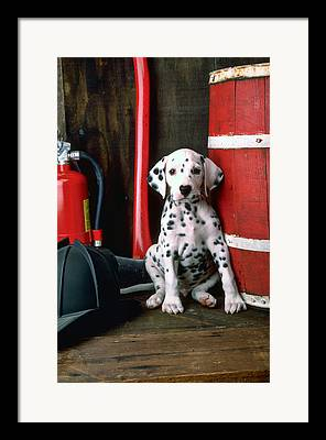 Domesticated Pet Framed Prints