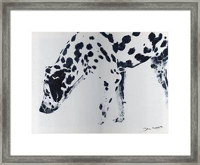 Dalmation Framed Print