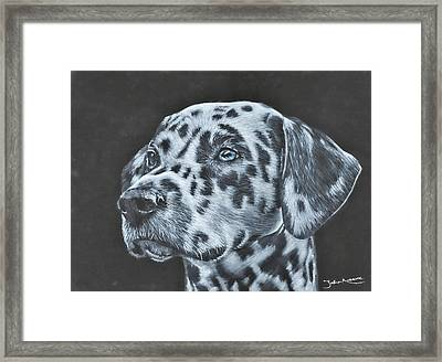 Dalmation Portrait Framed Print