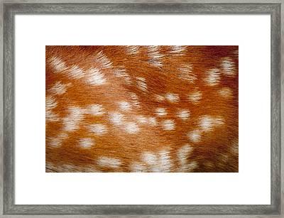 Dama Dama The Spotted Ginger Animal Fur Of A British Fallow Doe Deer Framed Print