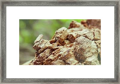 Damaged Wooden Beam Close Up Framed Print by Vlad Baciu