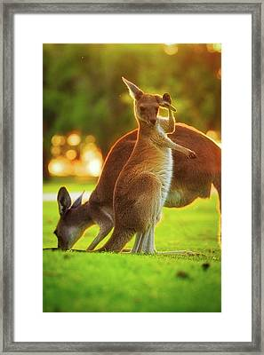 Framed Print featuring the photograph Damn Flies, Yanchep National Park by Dave Catley