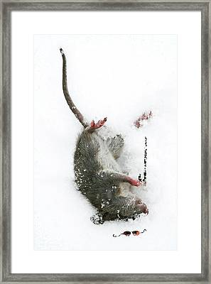 Framed Print featuring the photograph Damn by Jan Piller