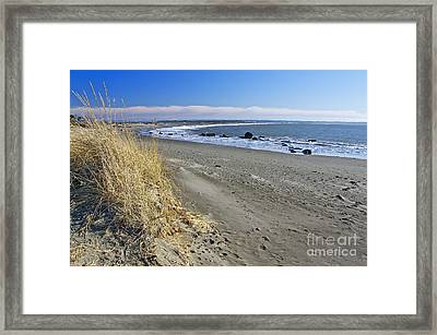 Damon Point Framed Print