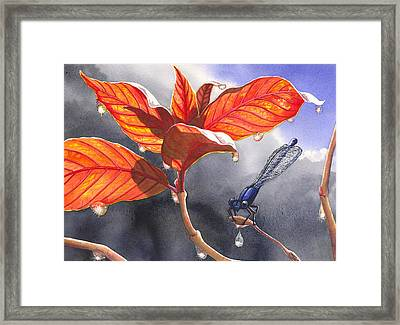 Damsel Fly Framed Print by Catherine G McElroy