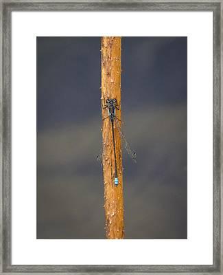 Damsel On A Stick Framed Print by Jean Noren